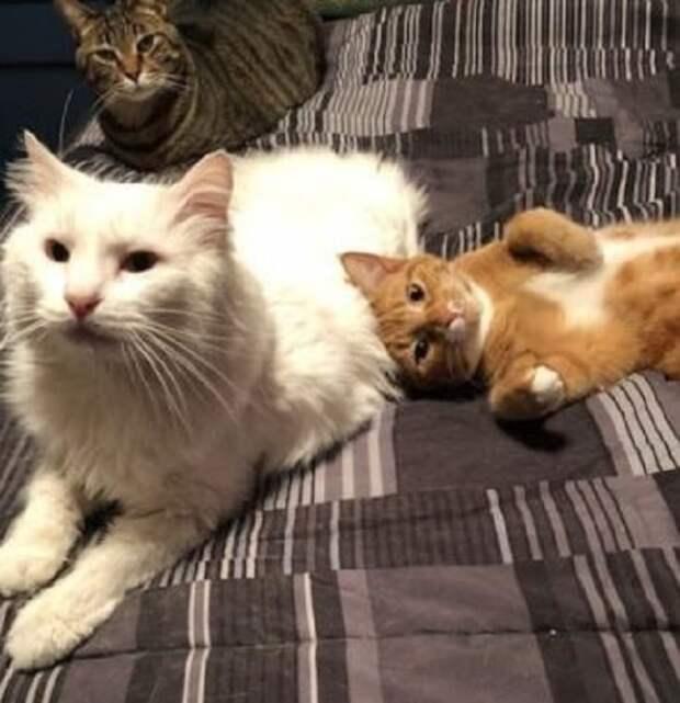 К одичавшему коту, брошенному хозяевами женщина обратилась со словами: «Не хочешь голодать – пойдем со мной!»