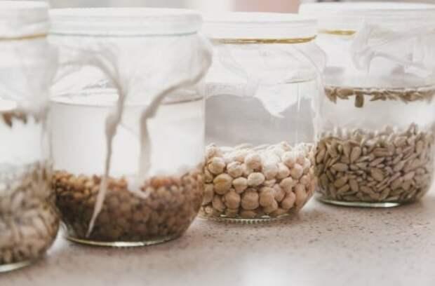 Старые семена: посеять или выбросить?