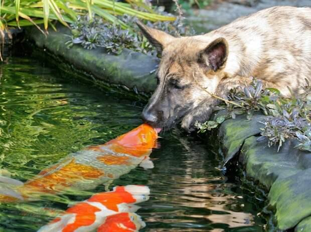 15 очаровательных поцелуев среди животных животные, поцелуй