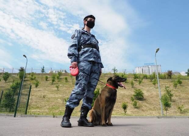Всего на службе в Росгвардии 30 поисковых собак — немецкие, бельгийские овчарки и лабрадор/Фото Ольги Чумаченко