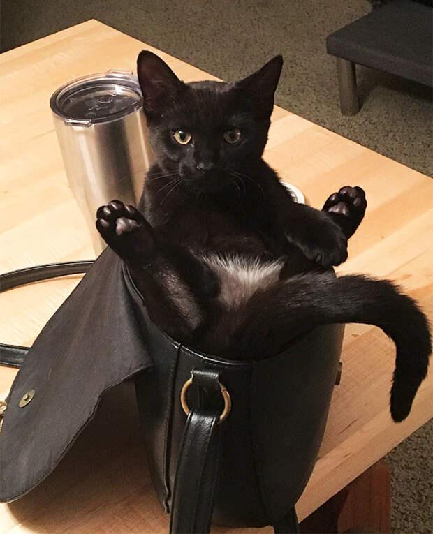 Наглая милота животные, забавно, котопост, коты, кошки, неожиданно, питомцы, юмор