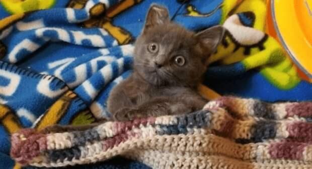 Маленький котенок по кличке Овёс получил серьезную травму позвоночника