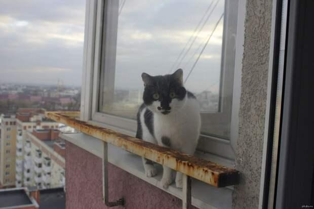 Кот гуляет за окном и шокирует весь дом...