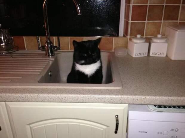30 случаев, когда люди ошибочно думали, что у них нет кота!