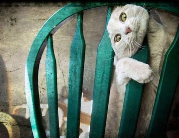 Моменты о которых стыдно вспоминать любому котэ животные, кошки, фото, юмор