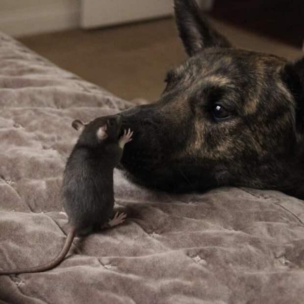 Собака-спасатель страдала от депрессии, пока не нашла необычного друга