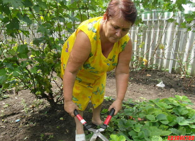 Советы большого урожая клубники от специалиста