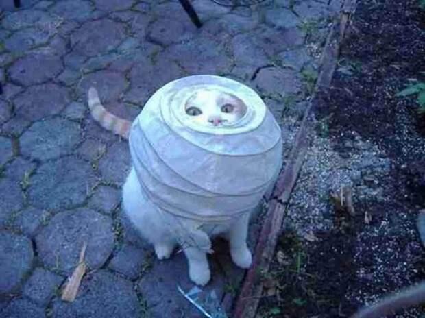 Миссия невыполнима! Очень забавные гифки с котиками!