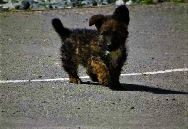 Маленький щенок Кроха и мальчик с огромным сердцем