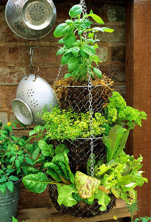 herb-garden-inspirations26 (419x615, 385Kb)