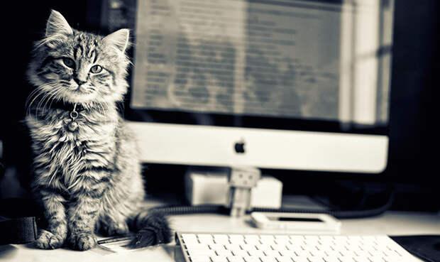 office-cat