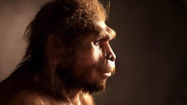 Действительно ли человек произошёл от обезьяны?