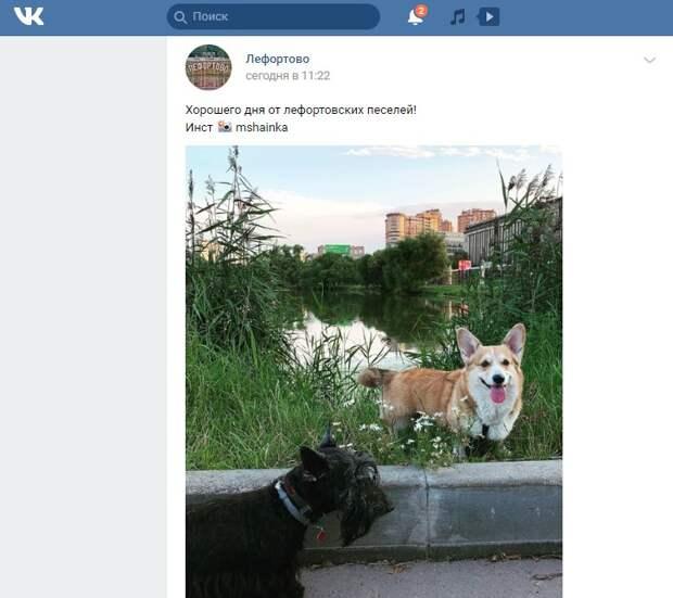 Фото дня: местный житель сфотографировал занятных лефортовских собак