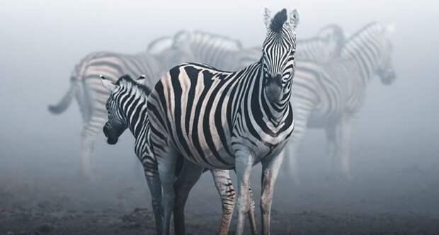 20 лучших снимков с фотоконкурса дикой природы