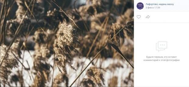 Фото дня: степная трава из Лефортовского парка