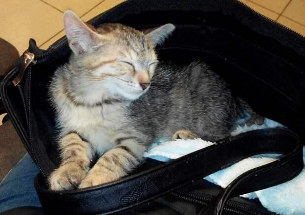 Почти слепой котенок тыкался в ноги прохожих, прося о помощи кот, котенок, кошка, слепой котенок
