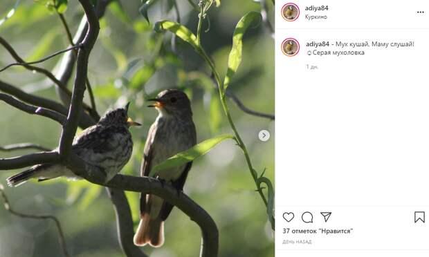 Фото дня: птичьи беседы