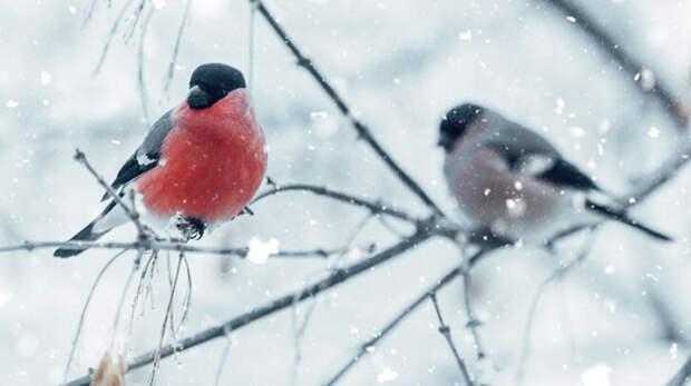 Зимовка в городе: как помочь птицам пережить холода