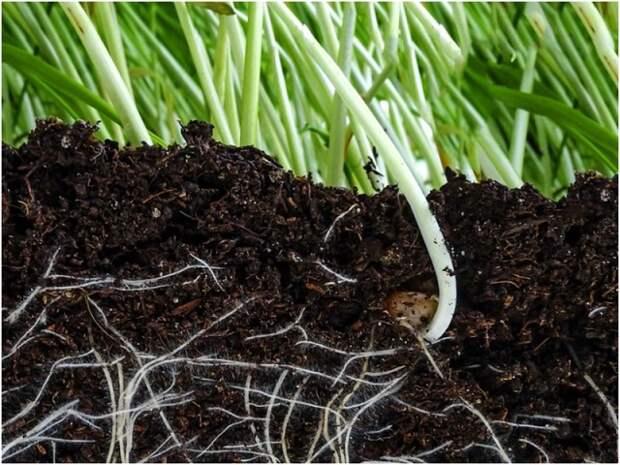 Натуральные стимуляторы для роста корней