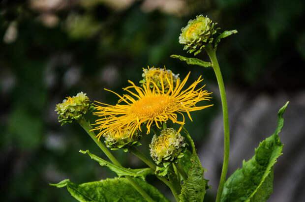 5 растений, которые обладают магическими свойствами и способны исцелить человека