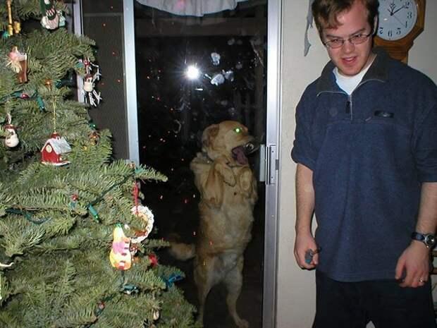 14. Walking Dead Dog животные, кадр, прикол, собака, юмор