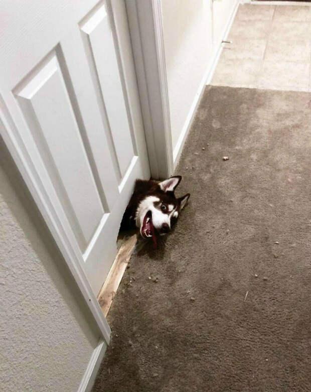 Собака-встречака! | Фото: do-slez.com.