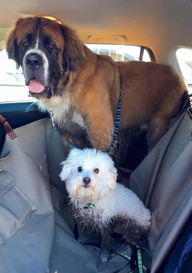 После прогулки с любимым псом...