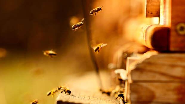 Ученые в США выяснили, как цезий попал в мед
