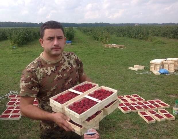 Советы по выращиванию здоровой клубники от фермера Ленинградской области