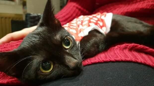 Так взаимная любовь спасает жизни и согревает сердца домашний питомец, животные, забота, кошка, спасение