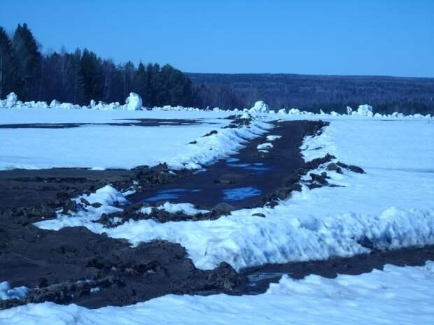 На поле в Увинском районе Удмуртии слили 120 кубометров жидкого навоза