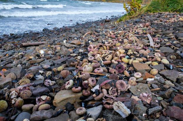 Greenpeace намерена отправить погибших на Камчатке животных на экспертизу
