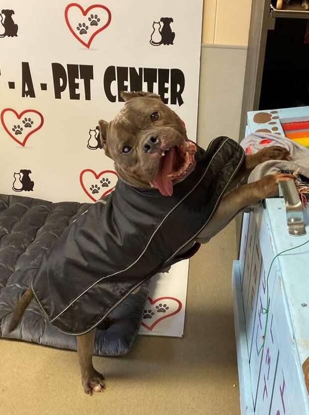 Старый пес 10 лет жил на улице. Сейчас он в приюте, но, кажется, потерял надежду на лучшую жизнь