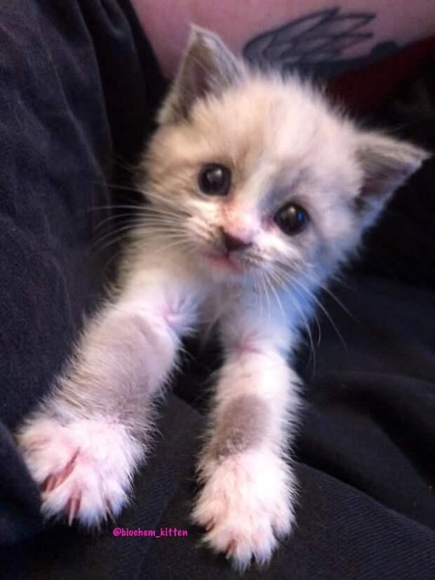 Этот маленький котенок покорил Интернет!