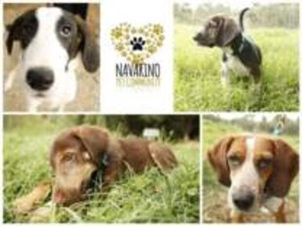 Costa Navarino и Purina найдут семьи бездомным собакам