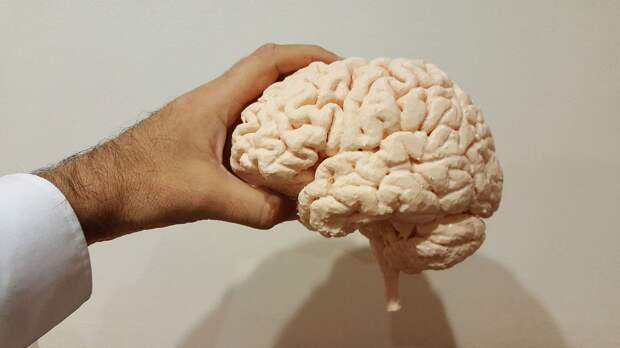 Злоупотребление алкоголем может спровоцировать уменьшение размеров мозга