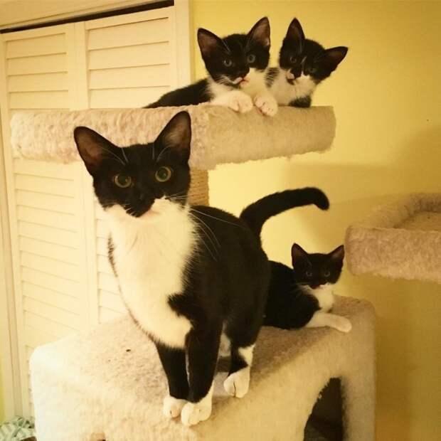Бродячая черно-белая кошка родила три свои мини-копии