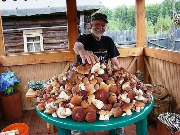 Почему финны не собирают грибы?