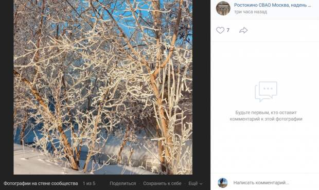 Фото дня: морозное волшебство в «Саду будущего»