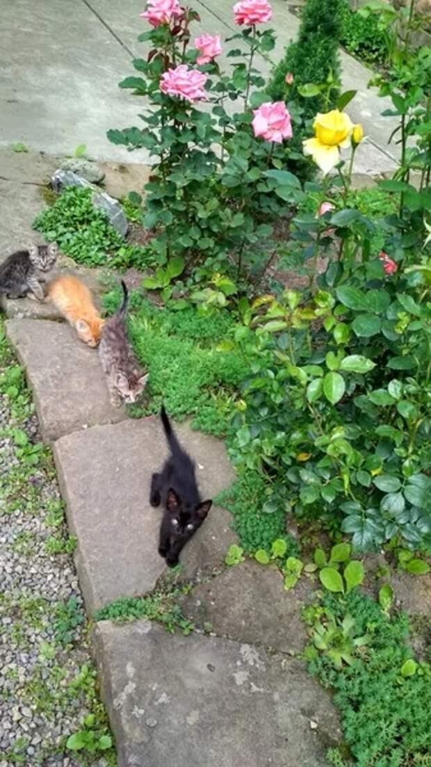 Сосед Андрей нагнулся, достал из мокрой ботвы котят, а потом со всего размаху как швырнул их в соседний огород