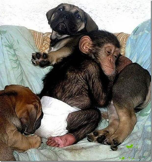 in-marmoset-a-new-mom_14_(www.funnypagenet.com)