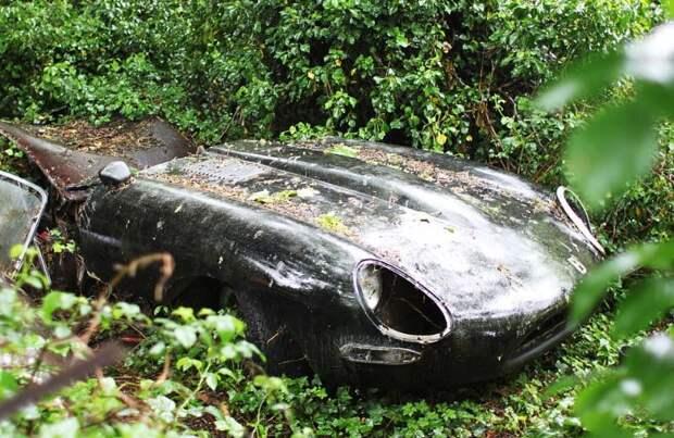 Воскрешение винтажного авто Jaguar, гнившего в зарослях почти 30 лет