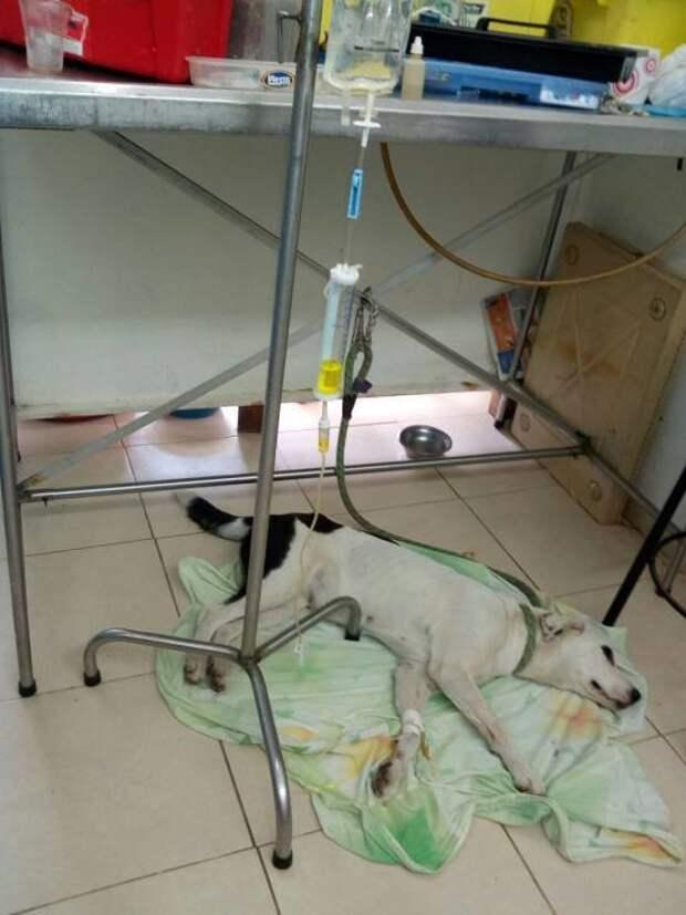 Собака умерла из-за 'разбитого сердца' после того, как владелец бросил её в аэропорту аэропорт, животные, смерть, собака, тоска, хозяин