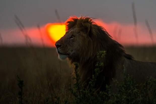 afrikanskie zakaty 3 Потрясающие африканские закаты от Пола Гольдштейна