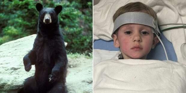 Дружелюбный медведь спас 3-летнего мальчика, пропавшего в лесу в мире мальчик, животные, история, медведь, пропавший в лесу, спасение