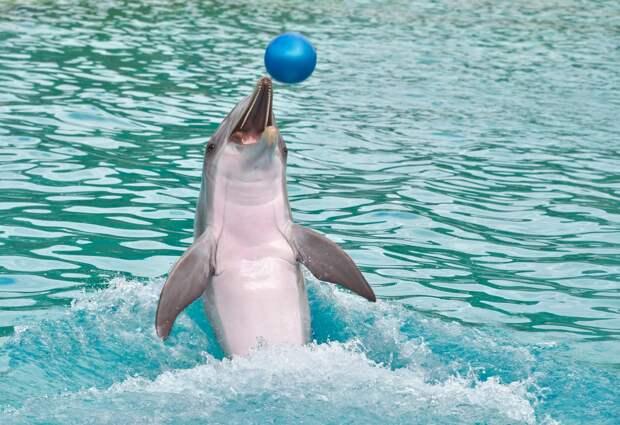 Прокуратура закрывает севастопольский дельфинарий