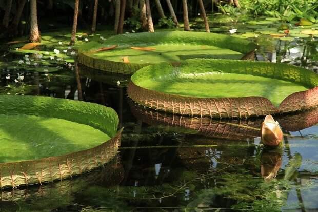 Amazonas13 Большое фотопутешествие по лесам Амазонки