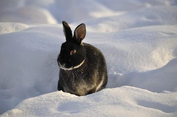 Доводилось ли вам встречать зайцев в Северном Тушине? – новый опрос