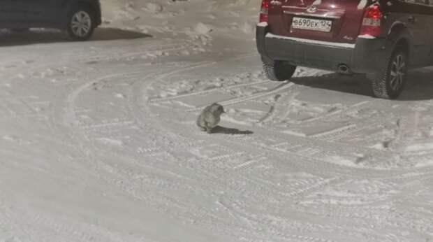 В тридцатиградусный мороз на улице сидела испуганная кошка, которую выгнали из дома