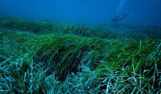 Океан придумал как бороться с пластиком без помощи человека Экология, Пластик, Мусор, Океан, Длиннопост, Загрязнение окружающей среды